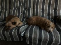 Även våra små hundar var trötta :)